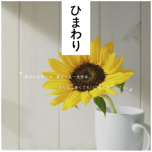 向日葵_copy_hzy_170118_14