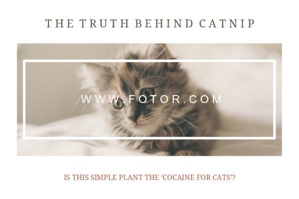 The Truth Behind Catnip
