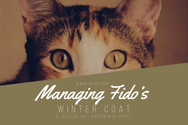 Managing Fido's_copy_CY_20170118