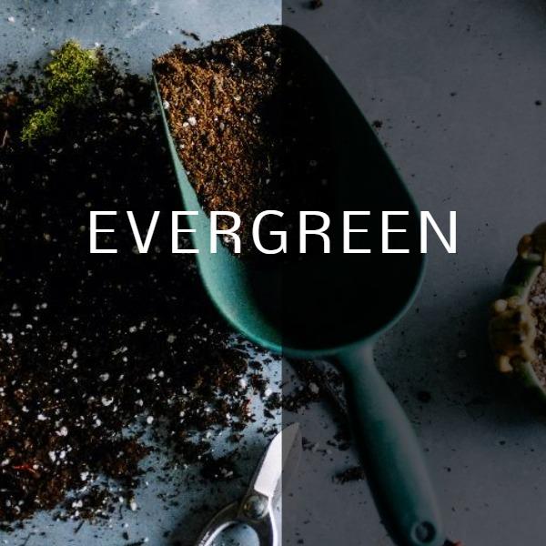 evergreen_lsj_20170206