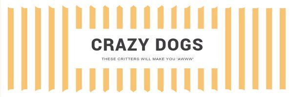 CRAZYDOGS_copy_CY_20170210