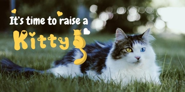 Kitty_xyt_20191220