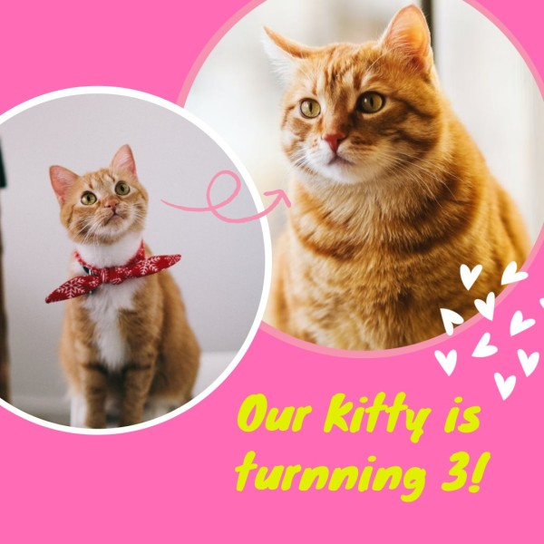 kitty_wl_20200628_photo collage