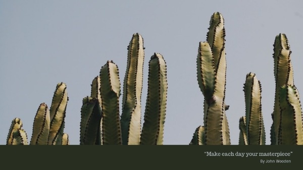 Dark Cactus Wallpaper