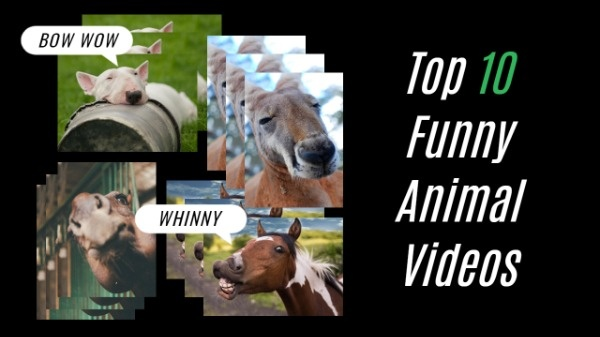 Funny Animal Videos Thumbnails