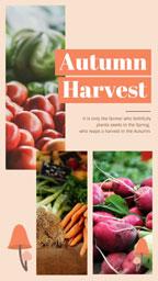 harvest_9x16_lsj_20181106