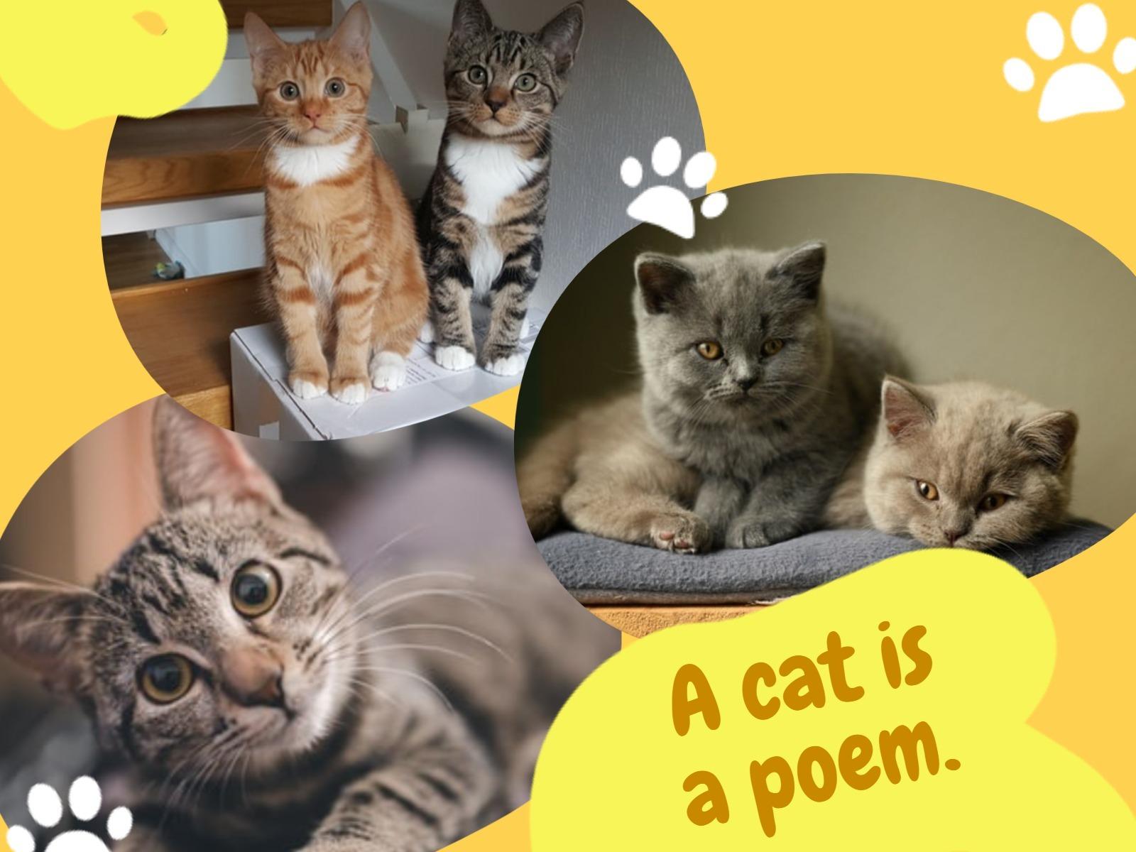 cat1_wl_20200228