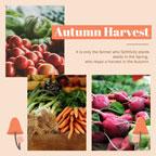 harvest_1x1_lsj_20181106