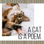 Cute Cat Collage